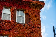 Photo of Edgerly Hall with red leaves on exterior walls